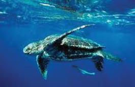 turtles-4