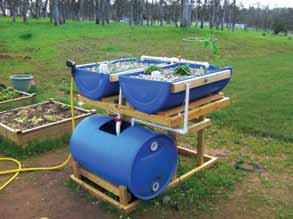 aquaponics2